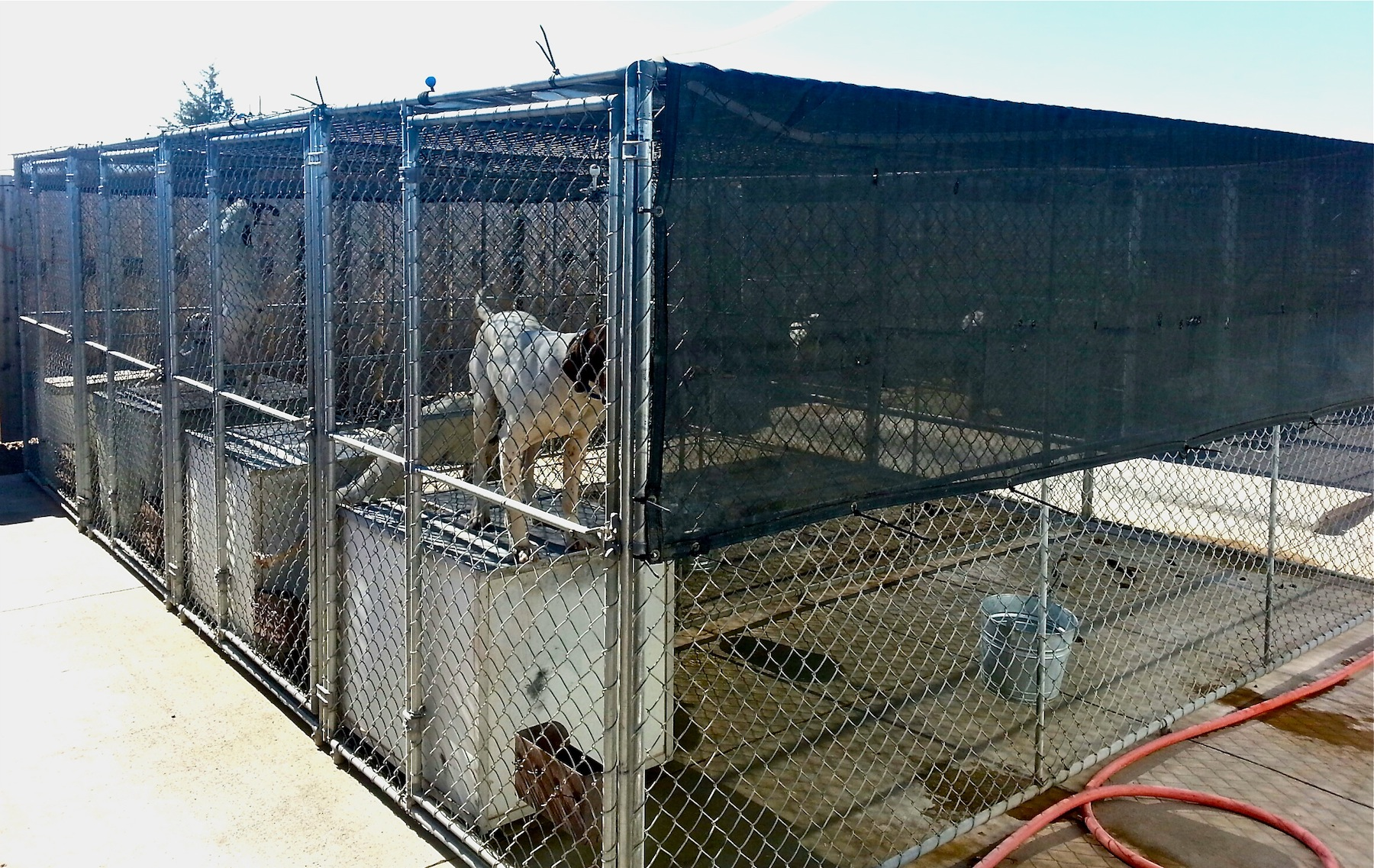Kennel Cover