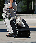Pet Rolling Pack